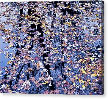 Fall Reflections Canvas Print by Alan L Graham