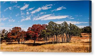 Fall Scene In The Texas Hill Country - Reimers Ranch Hamilton Pool Road - Texas Canvas Print by Silvio Ligutti