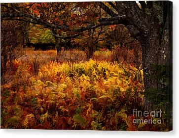 Fall Shadows - Dolly Sods West Virginia Canvas Print by Dan Carmichael