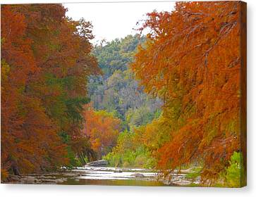 Fall Spectacular Canvas Print by David  Norman