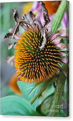 Fall Spikes Canvas Print