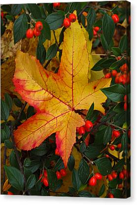 Canvas Print featuring the photograph Fall Splendor by Cheryl Perin