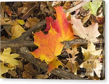 Fall Canvas Print by Steven Ralser