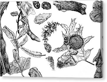 Fall Still Life Canvas Print by J M Lister