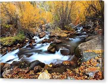 Fall Stream Canvas Print by Darryl Wilkinson