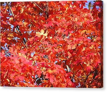 Fall Sugar Maple Canvas Print by John Wartman