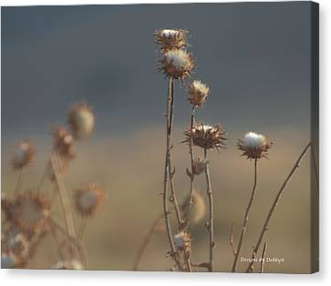Canvas Print featuring the photograph Fall Thistles At Dusk by Debby Pueschel