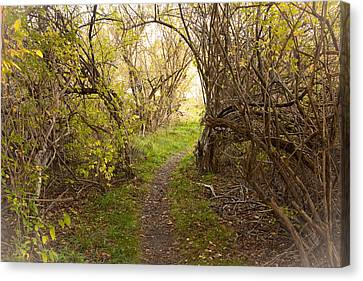 Fall Trail Canvas Print by Frank Winters