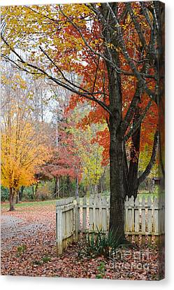 Fall Tranquility Canvas Print by Debbie Green