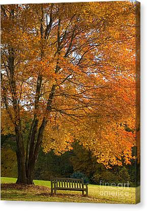 Fall Tree And Bench Canvas Print