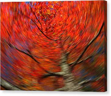 Fall Tree Carousel Canvas Print by Juergen Roth