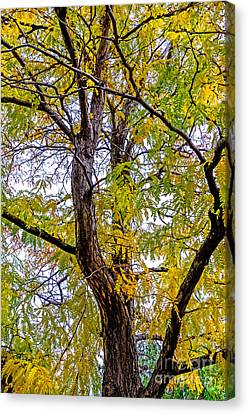 Fall Tree Canvas Print by Baywest Imaging