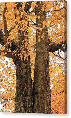 Canvas Print featuring the photograph Fall Trees by Amazing Jules
