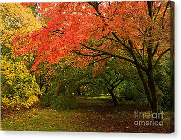 Fall Trees Canvas Print by Amanda Elwell