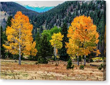 Fall Trees Canvas Print by Juli Ellen