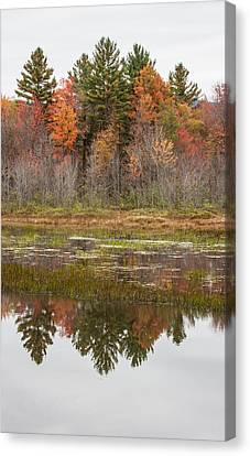 Fall Trees Reflected In Lake Chocorua Canvas Print by Karen Stephenson