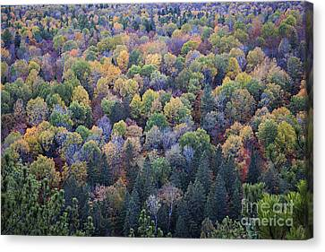 Fall Treetops Canvas Print by Elena Elisseeva