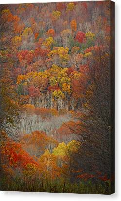 Fall Tunnel Canvas Print
