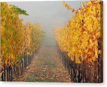 Pinot Noir Canvas Print - Fall Vines by Jean Noren