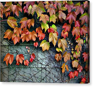 Fall Wall Canvas Print by Kjirsten Collier