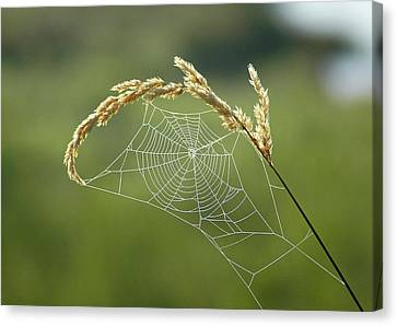 Fall Web Canvas Print by Annie Pflueger