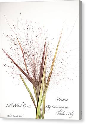 Fall Witch Grass Canvas Print