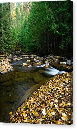 Fallen Autumn Color Leaves And Forest Canvas Print by Panoramic Images