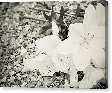 Fallen Bouquet Canvas Print by BandC  Photography