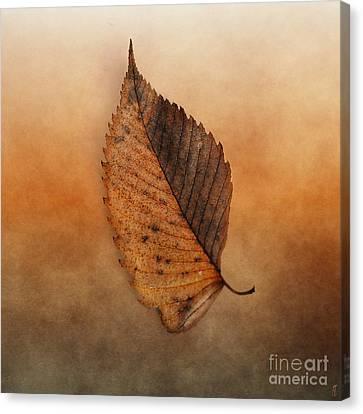 Fallen Brown Leaf Canvas Print by Jai Johnson