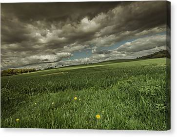 Fallen Canvas Print by Chris Fletcher