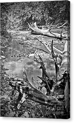 Fallen Canvas Print by Joe Russell