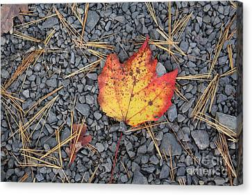 Canvas Print featuring the photograph Fallen Leaf by Dora Sofia Caputo Photographic Art and Design