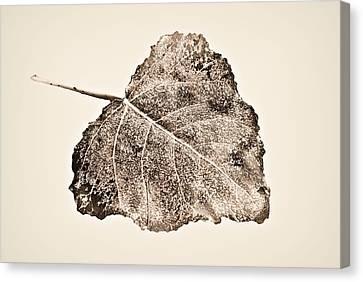 Fallen Leaf On Water Canvas Print - Fallen Leaf In Antique T by Greg Jackson