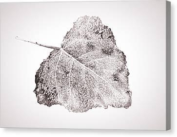 Fallen Leaf On Water Canvas Print - Fallen Leaf In Bwt by Greg Jackson