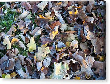 Fallen Leaves Canvas Print by Bill Cannon