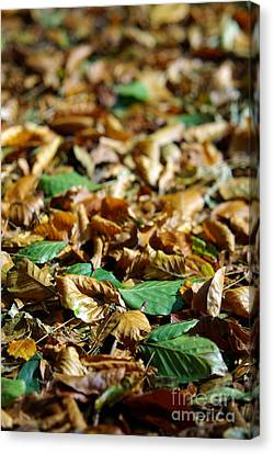 Fallen Leaves Canvas Print by Carlos Caetano