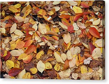 Canvas Print featuring the photograph Fallen Leaves by Dora Sofia Caputo Photographic Art and Design