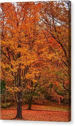 Fallen Leaves II Canvas Print