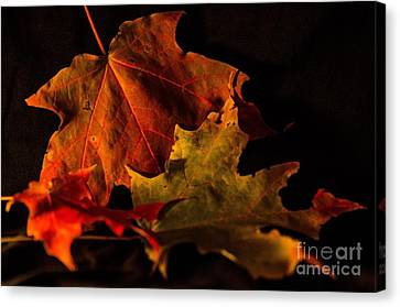 Canvas Print featuring the photograph Fallen Leaves by Judy Wolinsky