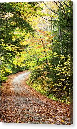 Fallen Leaves Litter A Forest Road Canvas Print by Robbie George