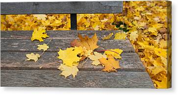 Fallen Leaves On A Wooden Bench Canvas Print by Panoramic Images