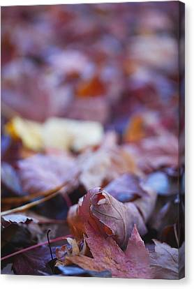 Fallen Leaves Road Canvas Print by Irina Wardas