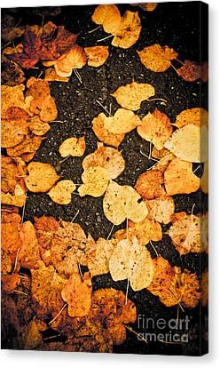 Fallen Leaves Canvas Print by Silvia Ganora