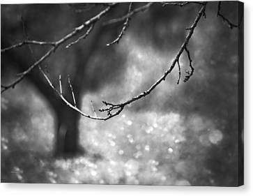 Fallen Leaves Canvas Print by Theresa Tahara