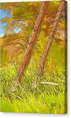 Fallen Pines Canvas Print