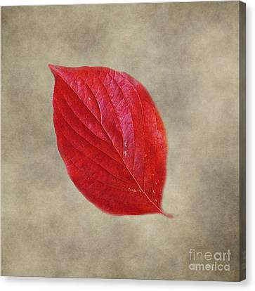 Fallen Red Leaf Canvas Print by Jai Johnson