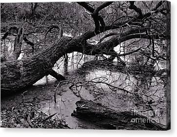 Fallen Tree Canvas Print