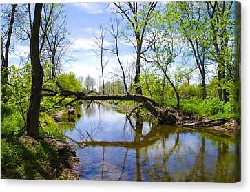 Fallen Tree Over Marsh Creek Canvas Print
