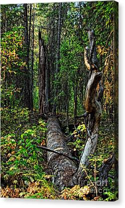 Canvas Print featuring the photograph Fallen Tree by Sam Rosen