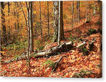 Canvas Print featuring the photograph Fallen Trees by Alicia Knust